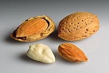 Almond Bagging Equipment